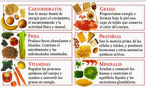 los alimentos de origen animal y vegetal