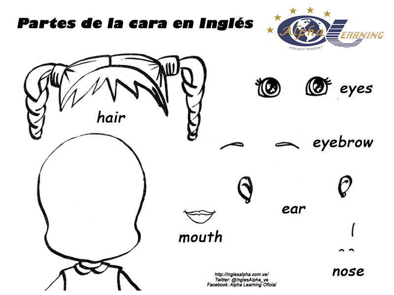 Partes De La Cabeza Y Cara En Español E Ingles Y Su Pronunciación