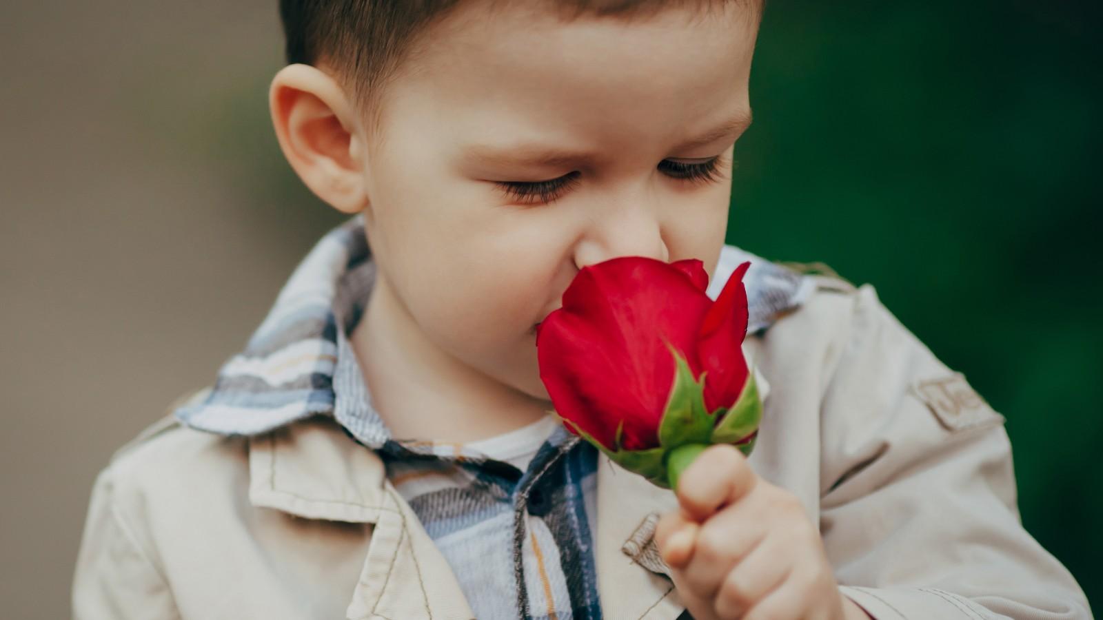 Actividades para el olfato Para entrenar este sentido, podrías esconder en pequeñas cajitas objetos que desprendan olores fuertes. Por ejemplo: Canela, limón, jabón, caramelos, entre otros. Preséntale una por una y pregúntale que olores percibe.