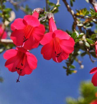 Conoce 3 distintivas plantas nativas del Perú